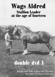 Wags Aldred - Stallion Leader at the Age of Fourteen